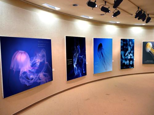 Jellyfish_art