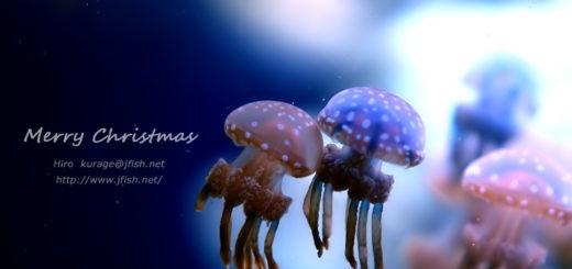 タコクラゲ クリスマスカード